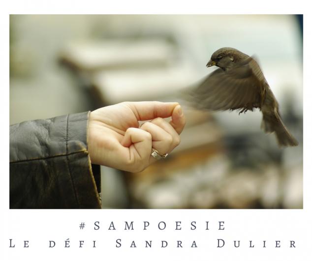 Un oiseau et une main, légèreté et délicatesse... écrire un poème #Sampoésie.