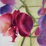 Orchidee d'Adyne Gohy sur le réseau Arts et Lettres