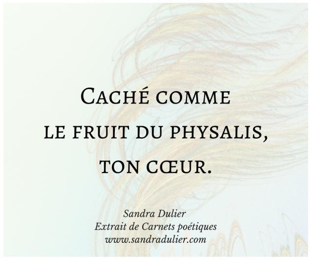 Physalis - extrait de Carnets poétiques de Sandra Dulier - amour - coeur - citation .