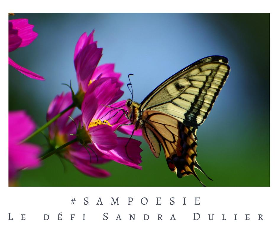 Que vous inspire cette photo ? A vos poèmes #Sampoésie. #papillon #été #ciel #bleu #écrire #poésie.
