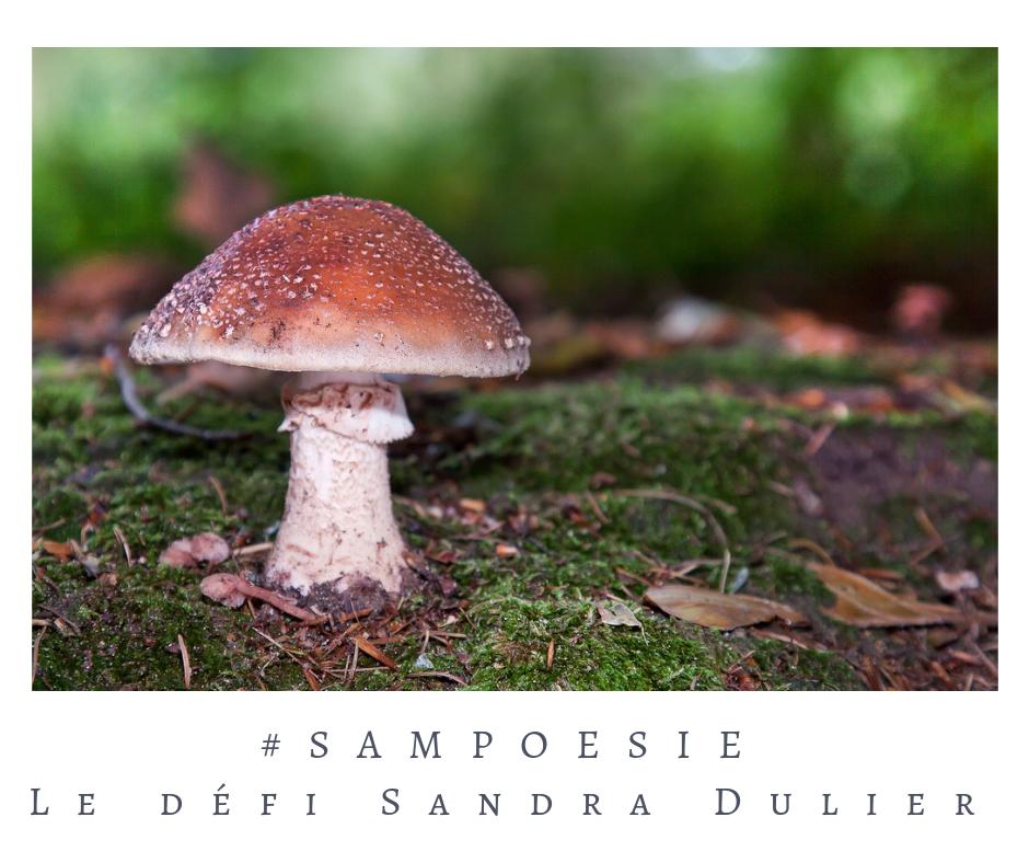 Poésie, champignon, automne