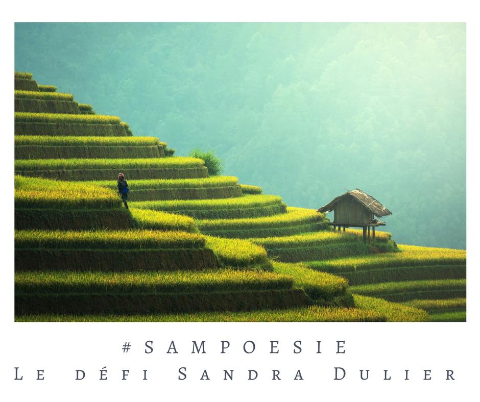 Que vous inspire cette photo ? A vos poèmes #Sampoésie. Riz, rizière, terrasse, Asie, écrire, poésie.