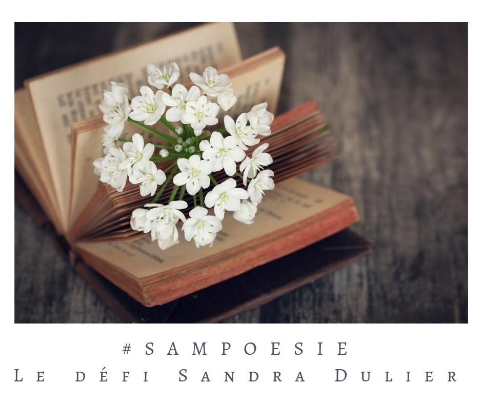 Que vous inspire cette photo ? prunus, cerisier, printemps, livre, blanc