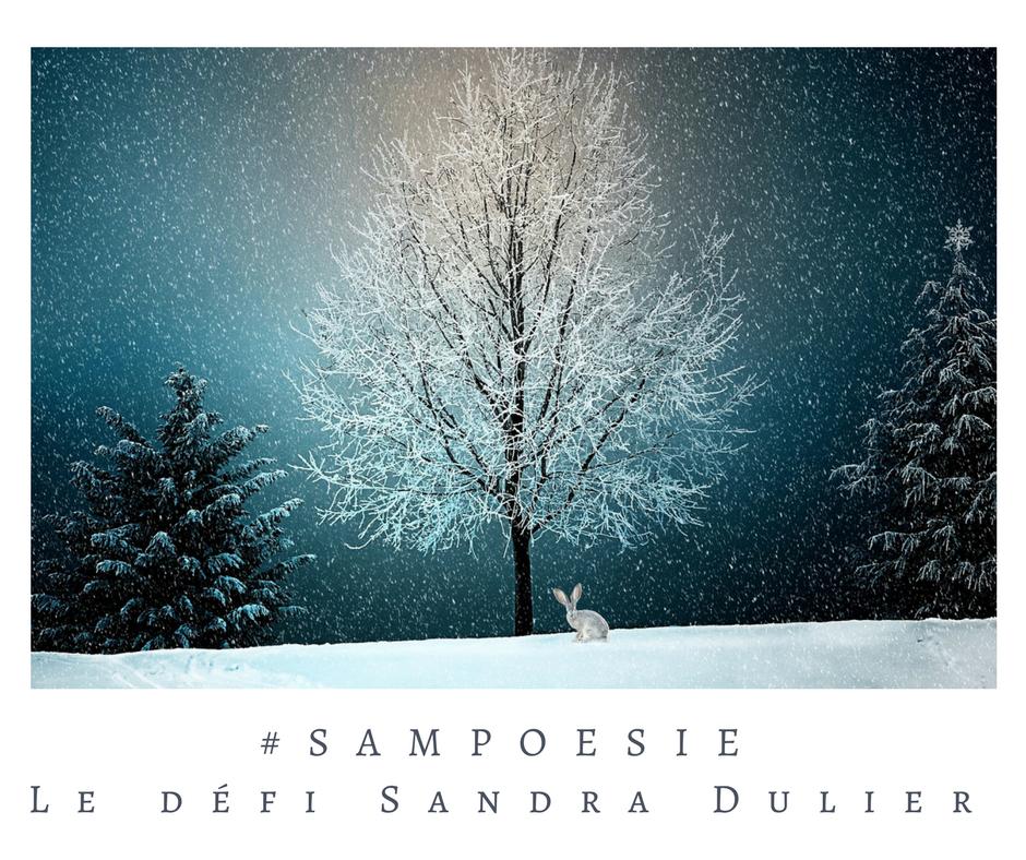 Que vous inspire cette photo ? A vos poèmes #Sampoésie. #inspiration #lapin #sapin #Noël #hiver #naige #arbre #nuit #blanc#écrire #poésie.