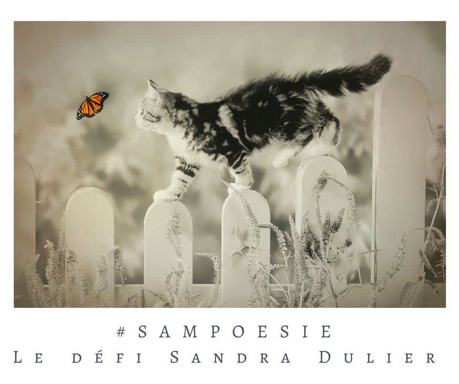 Un défi littéraire… écrire un poème #Sampoésie. Chat, papillon.