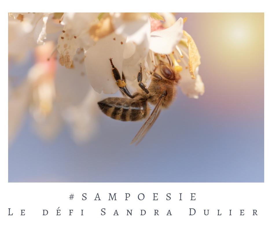 Que vous inspire cette photo ? poésie, abeille, nature, environnement, écologie