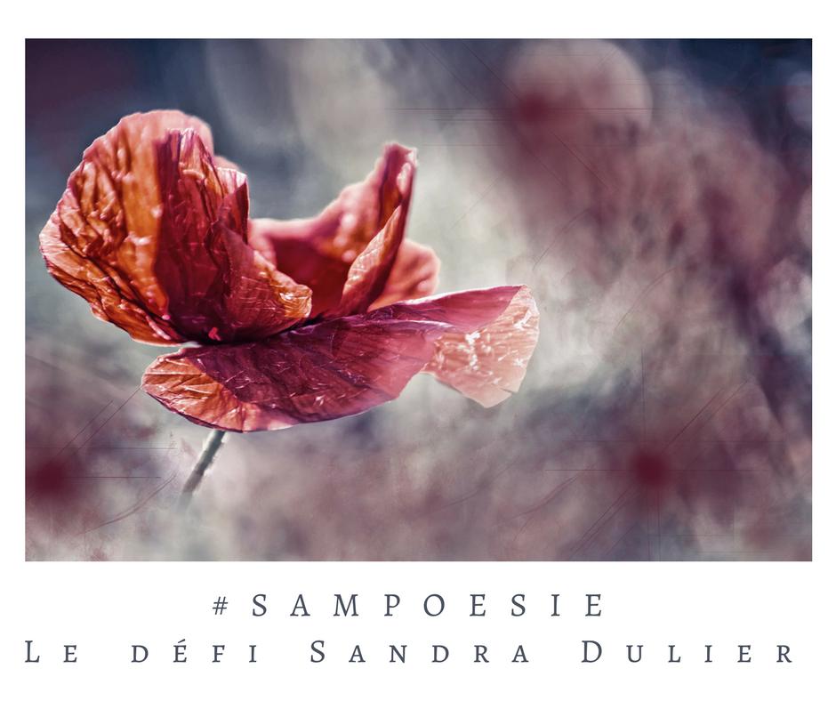 Que vous inspire cette photo ? A vos poèmes #Sampoésie. #inspiration #novembre #armistice #coquelicot #paix #guerre #écrire #poésie.