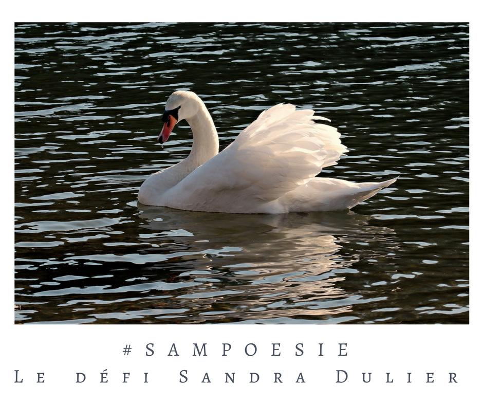 Que vous inspire cette photo ? A vos poèmes #Sampoésie. Cygne, romantisme, soir, écrire, poésie.
