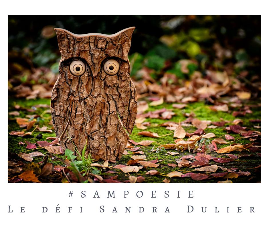Que vous inspire cette photo ? A vos poèmes #Sampoésie. #landart #hibou #bois #automne #forêt #poésie #écrire