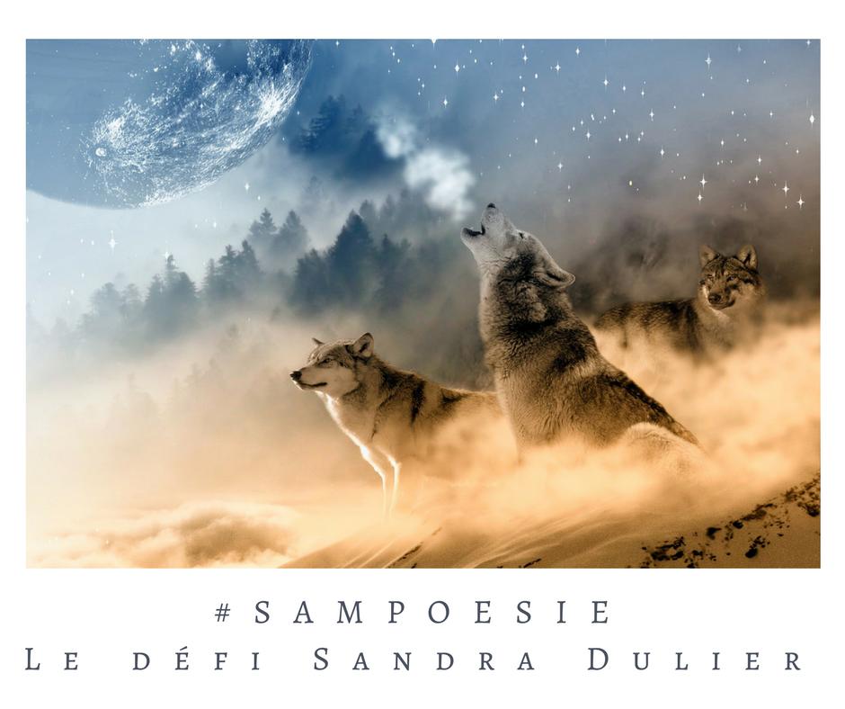 Que vous inspire cette photo ? A vos poèmes #Sampoésie. #inspiration #lune #loups #hiver #nature #neige #nuit #blanc #écrire #poésie.