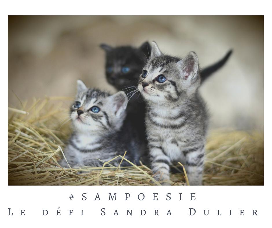 Que vous inspire cette photo ? A vos poèmes #Sampoésie. #chat #chatons #écrire #poésie
