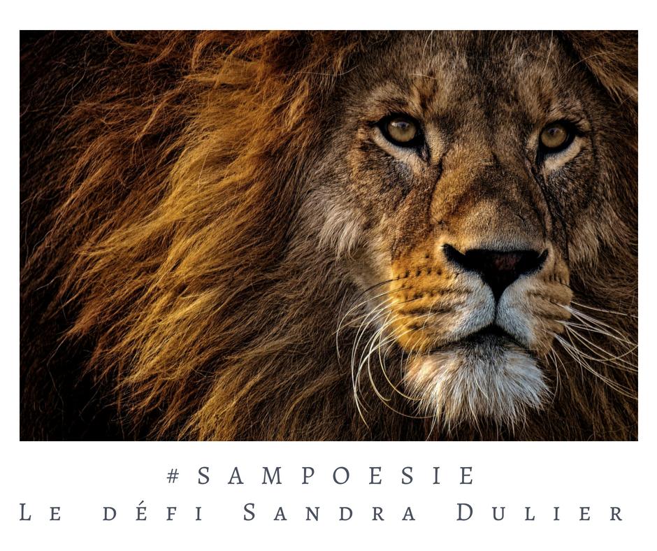 Que vous inspire cette photo ? A vos poèmes #Sampoésie. #lion #Afrique #brun #poésie