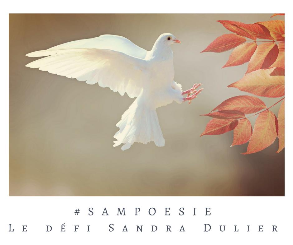 Que vous inspire cette photo ? A vos poèmes #Sampoésie. Colombe, paix, automne, écrire, poésie.