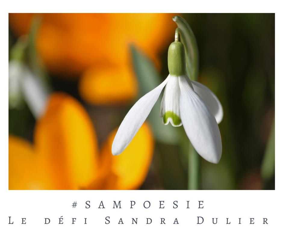 Que vous inspire cette photo ? A vos poèmes #Sampoésie. #perce #neige #fleur #macro #écrire #poésie.