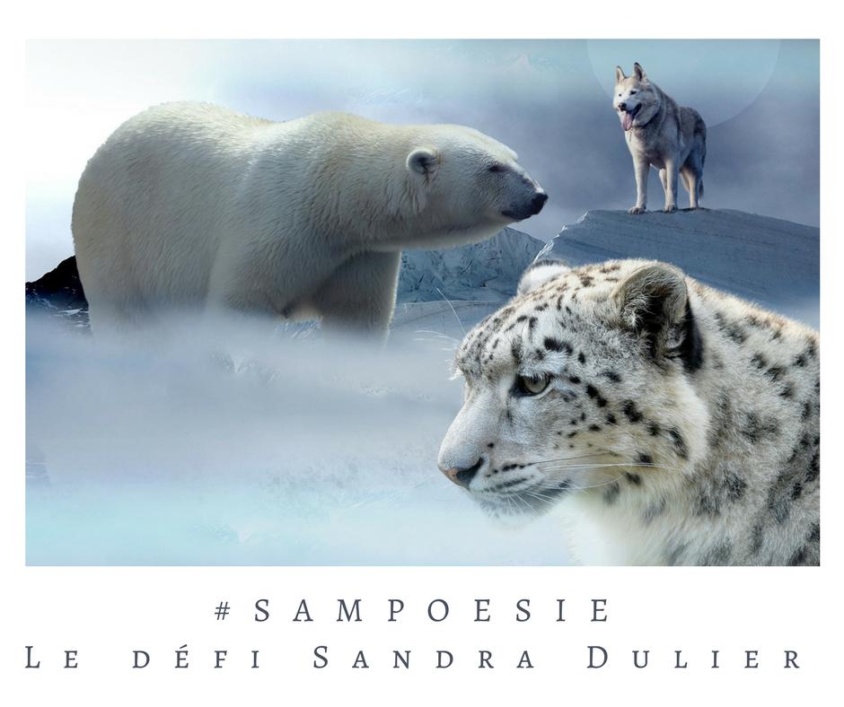 Que vous inspire cette photo ? A vos poèmes #Sampoésie. Ours polaire, loup, guépard des neiges, animaux en danger, écrire, poésie.