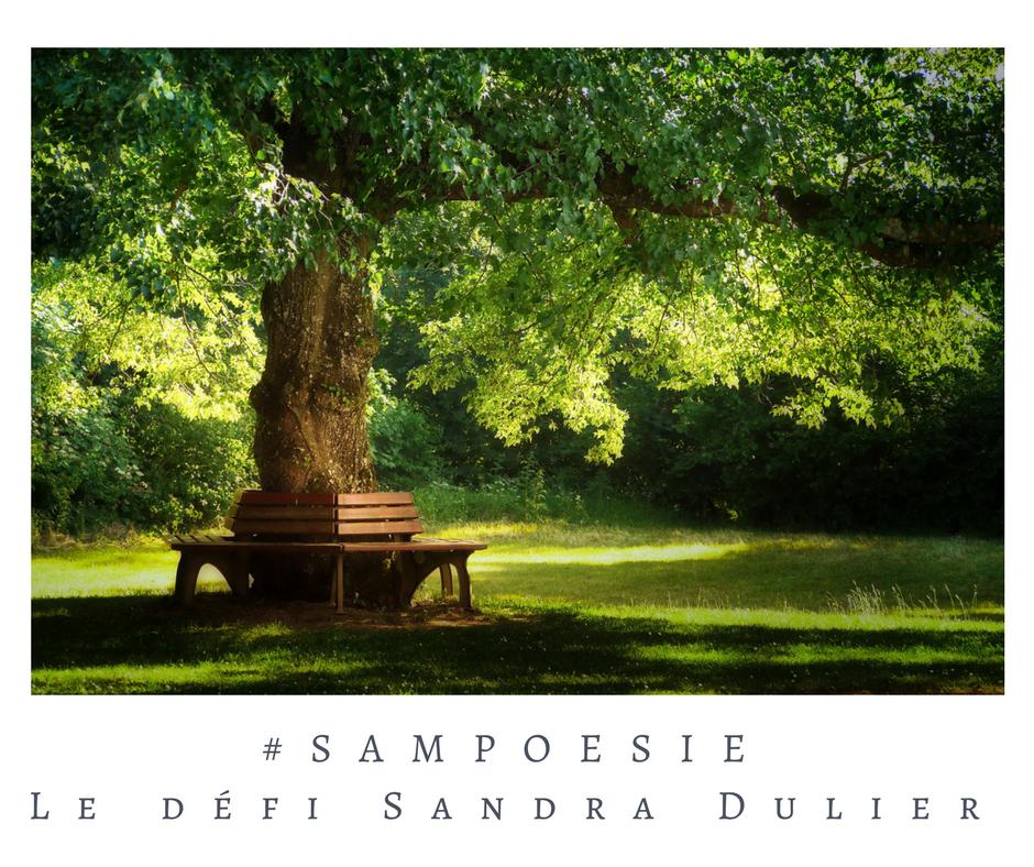 Que vous inspire cette photo ? A vos poèmes #Sampoésie. #arbre #parc #jardin #banc #printemps #écrire #poésie.