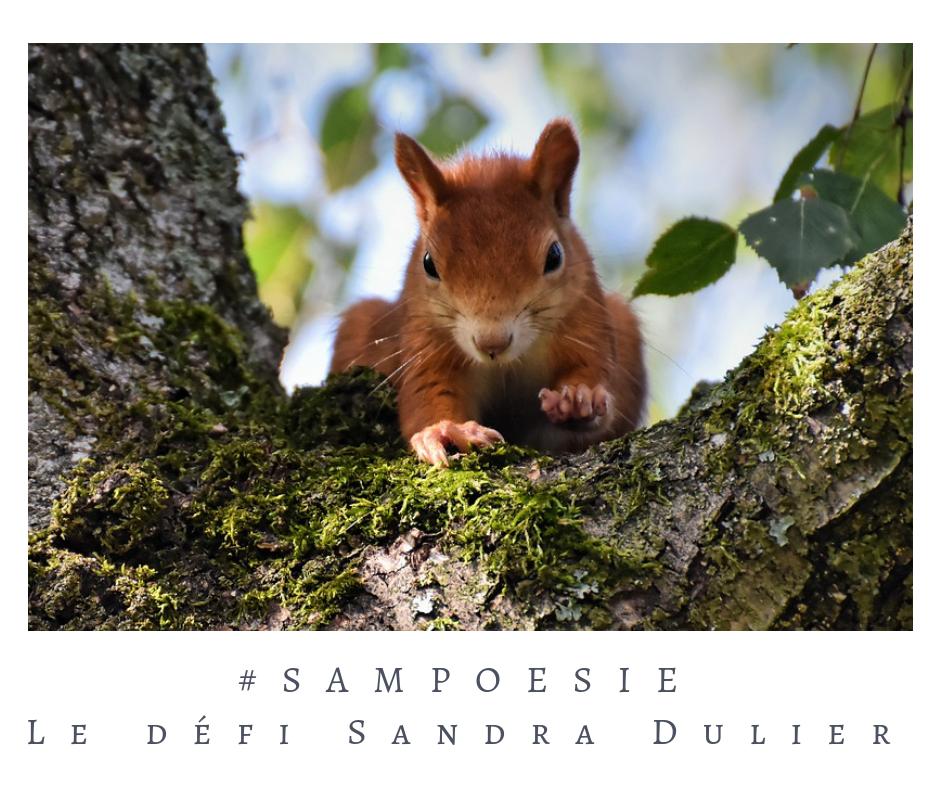 Que vous inspire cette photo ? poésie, photo, forêt, écureuil, automne