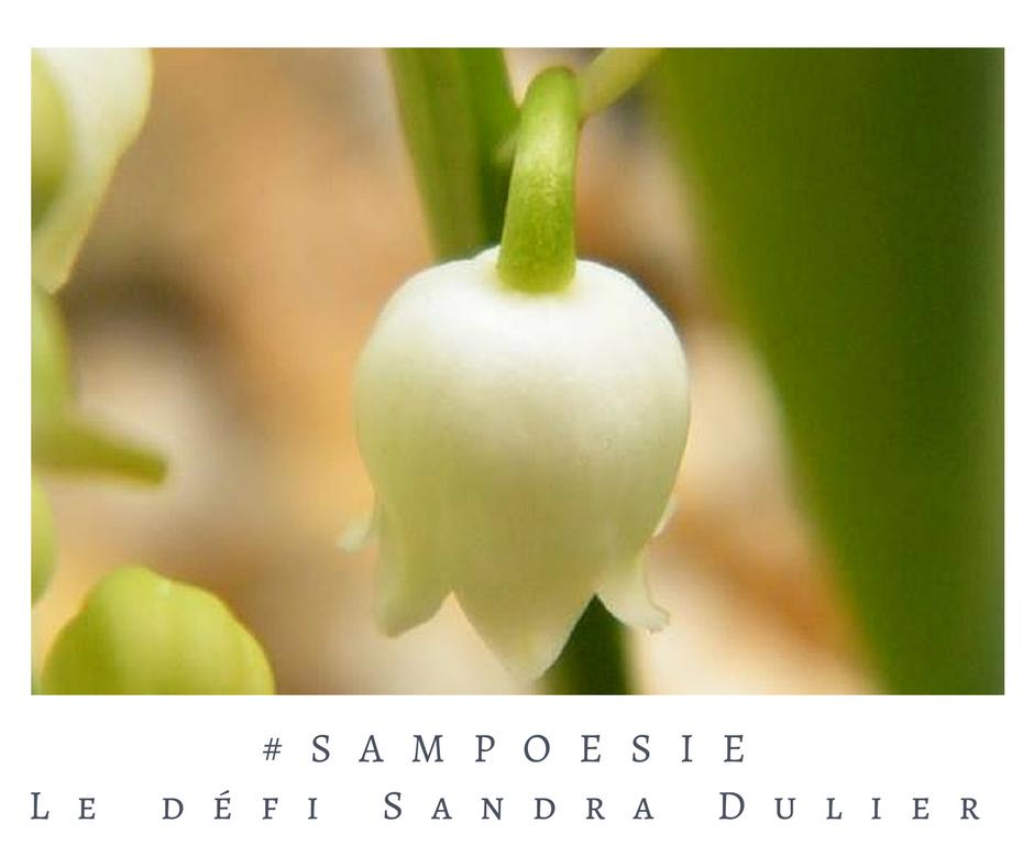 Un défi littéraire… écrire un poème #Sampoésie. Muguet, macro, mai.