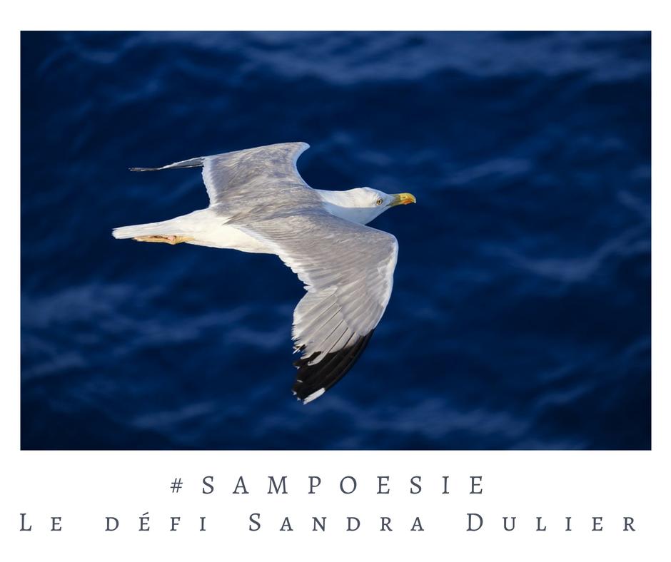 Que vous inspire cette photo ? A vos poèmes #Sampoésie. #goéland #été #oiseau #mer #écrire #poésie.