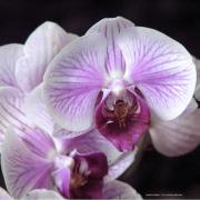 Orchidee fleur de poesie source de vie