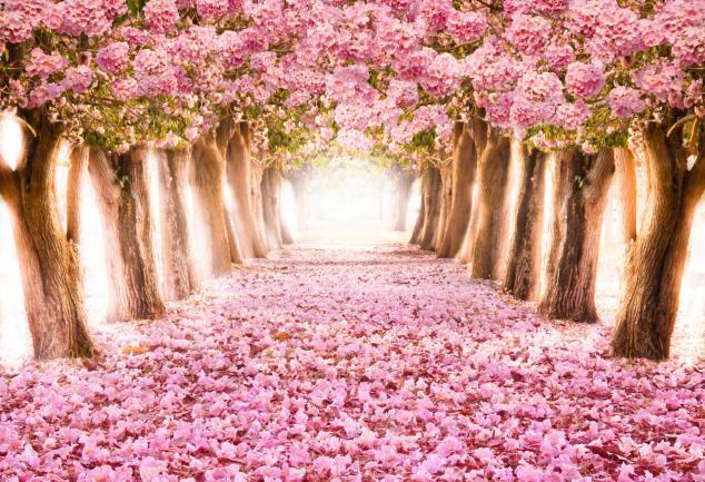 Ronde des saisons printemps